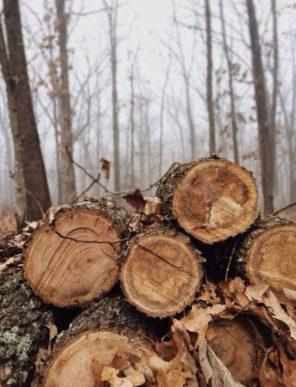Winter Log Photography